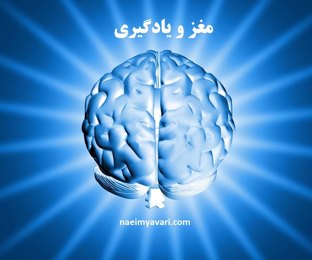 مغز یادگیرنده- دکتر نعیمیاوری