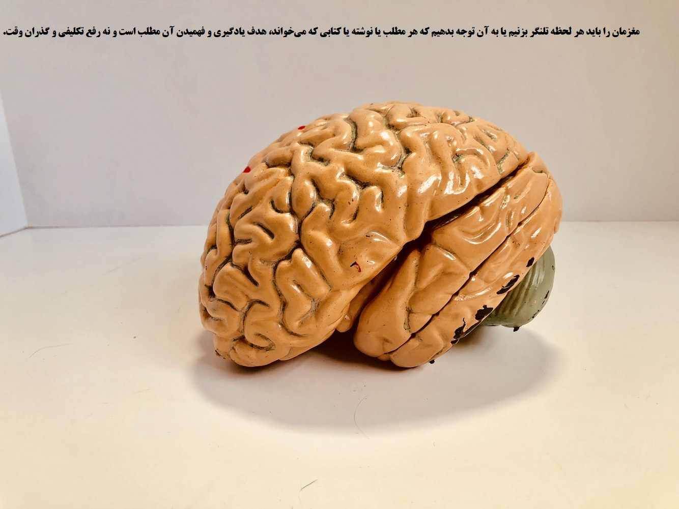 مغز. یادگیری